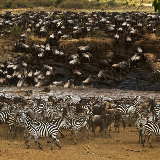 Migration Kenya Mara Plains Camp