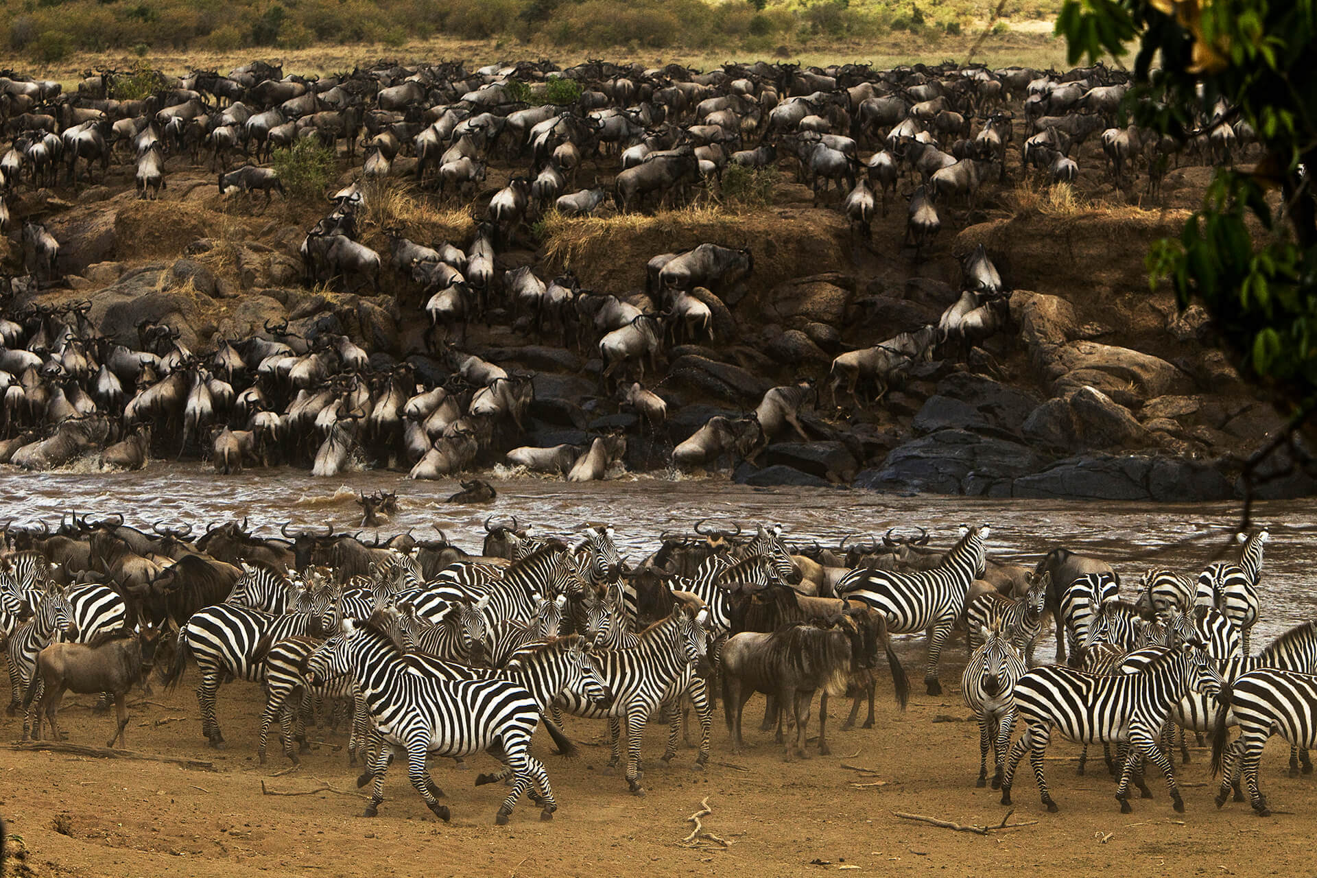 Migration Kenya Mara Plains Camp