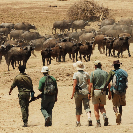 Ecotourism in Africa