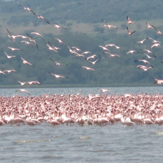 Kenya Safari Tours Lake Nakuru