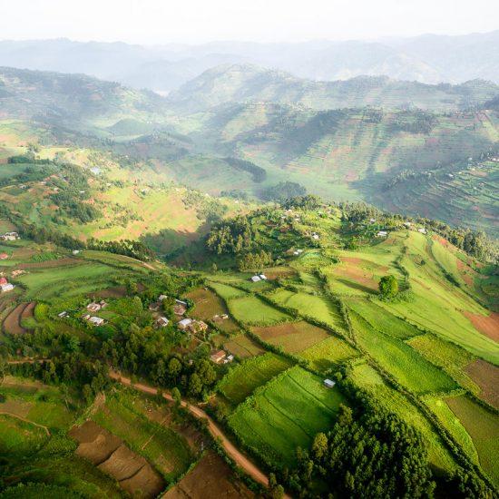 Rwanda Gorillas community