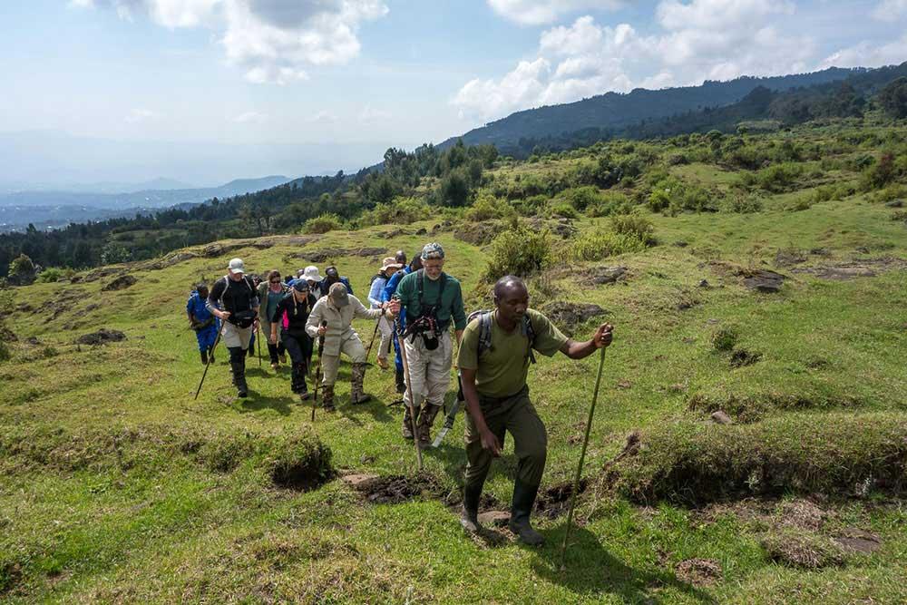 Rwanda Gorillas or Uganda Gorillas 4