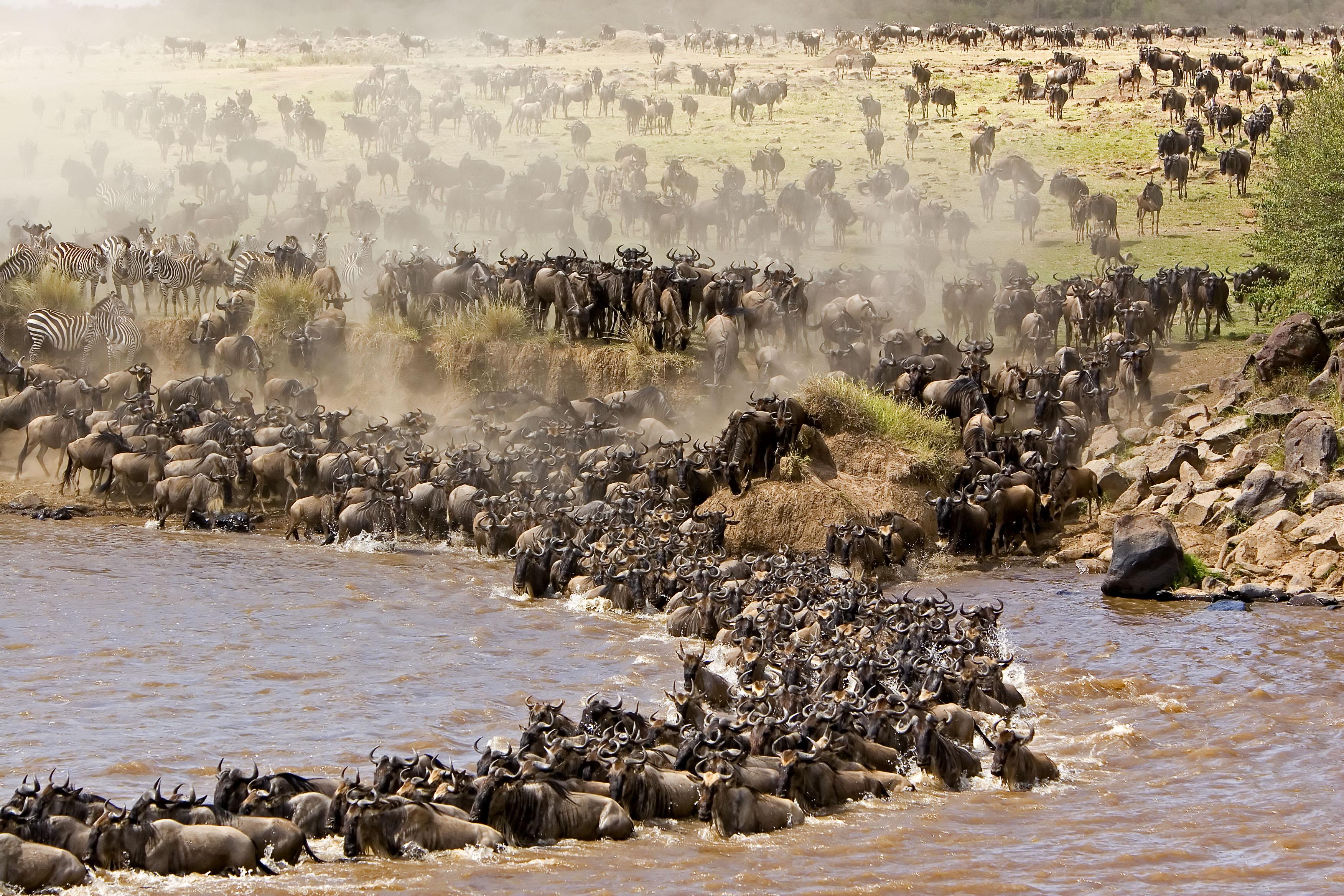 Serengeti Wildebeest Migration Tanzania